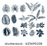 tropical collection. botanical... | Shutterstock .eps vector #635690108