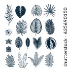 tropical collection. botanical... | Shutterstock .eps vector #635690150