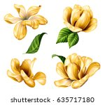 botanical illustration ... | Shutterstock . vector #635717180