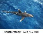 shark fin in water  gray reef... | Shutterstock . vector #635717408
