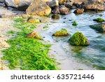 Green Algae On The Sea Shore...