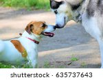 Stock photo two dogs jack russell terrier and husky gently touching by their noses and playing together 635737643
