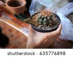 cactus in pot with gardening... | Shutterstock . vector #635776898