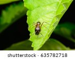 black ant on leaf | Shutterstock . vector #635782718