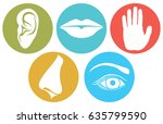 5 senses  smell  touch  hearing ... | Shutterstock .eps vector #635799590