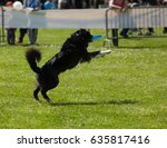 border collie dog playing with... | Shutterstock . vector #635817416