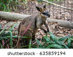 wallaby in australia | Shutterstock . vector #635859194