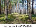 spring forest trees landscape....   Shutterstock . vector #635861066