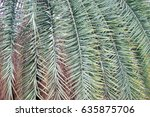 nature concept green trees in... | Shutterstock . vector #635875706