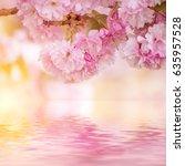 fresh pink flowers of sakura... | Shutterstock . vector #635957528