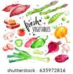 hand drawn watercolor... | Shutterstock . vector #635972816