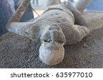 pompeii reproduction of... | Shutterstock . vector #635977010