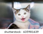 Happy Shelter Kitten