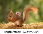 Red Squirrel Standing With...