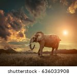 elephant with trunks and big... | Shutterstock . vector #636033908