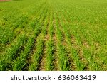 spring green field | Shutterstock . vector #636063419