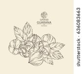 background with guarana.... | Shutterstock .eps vector #636083663