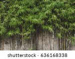 Green Young Bamboo Background...