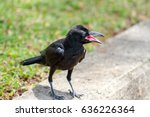 Black Raven On Green Grass Wit...