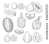 exotic fruits vector sketches.... | Shutterstock .eps vector #636231923