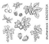 Berries Sketch Vector Icons Se...
