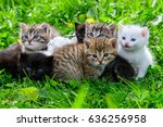 Group Of Little Kittens In The...