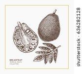 breadfruit hand drawn... | Shutterstock .eps vector #636282128