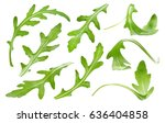 ruccola leaf isolated on white...   Shutterstock . vector #636404858