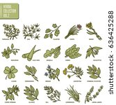 hand drawn vector set of herbs... | Shutterstock .eps vector #636425288