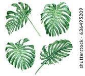 monstera leaves. botanical... | Shutterstock . vector #636495209