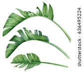 large palm leaves. botanical... | Shutterstock . vector #636495224