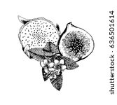 vector hand drawn exotic fruits.... | Shutterstock .eps vector #636501614
