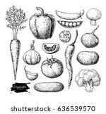 vegetable hand drawn vector set.... | Shutterstock .eps vector #636539570