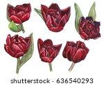 scrap set of dark red...   Shutterstock . vector #636540293