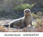 Small photo of Seal pup
