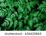 good green leaves. green... | Shutterstock . vector #636620863