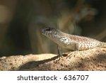 desert lizard and natural... | Shutterstock . vector #636707