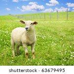 Cute Funny Sheep Or Lamb In...