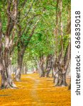 tree tunnel  walkway with... | Shutterstock . vector #636835018