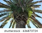 palm tree during sunset | Shutterstock . vector #636873724