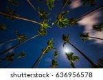 Tropical Night Sky  Coconut...