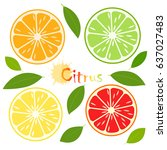 citrus slice with green leaves  ... | Shutterstock . vector #637027483