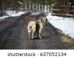 stray dog on a rural road | Shutterstock . vector #637052134