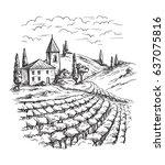 rows of vineyard grape plants... | Shutterstock .eps vector #637075816