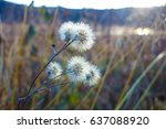 flower with seeds in autumn | Shutterstock . vector #637088920