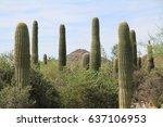 arizona cactus | Shutterstock . vector #637106953