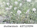 Small photo of Roadside white flowers. Capsella and Dandelion.
