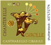girolle in engraved style.... | Shutterstock .eps vector #637171774