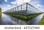 great tomato nursery and... | Shutterstock . vector #637227460