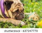 Real Estate. A Pug Dog Lies...
